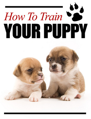 Product picture How to Train Your Puppy  Unrestricted PLR